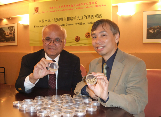 The soya bean is native to China, but having been grown in other lands for many years it has lost some of its genetic robustness. The <b>Homecoming of Soybeans</b> project aims at restoring the crop's stress tolerance and enabling it to be grown in more parts of China. Prof. Samuel Sun (left) and Prof. Lam Hon-ming are at the helm of this meaningful project.
