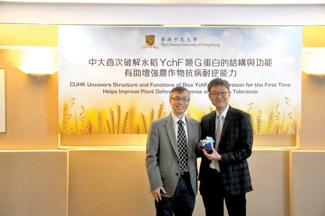 Prof. Lam Hon-ming (left) and Prof. Wong Kam-bo show the 3-D model of plant protein